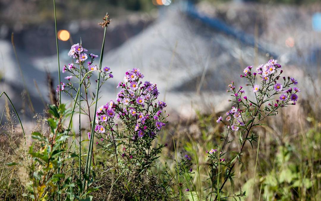 """""""Monipuulajisesta Tokoinrannan puistosta ei kaikkia puita olisi tarvinnut kaataa"""" – Miten luonnon monimuotoisuus voidaan huomioida rakennusalalla?"""